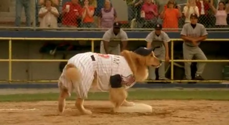 Air Bud Seventh Inning Fetch - scene